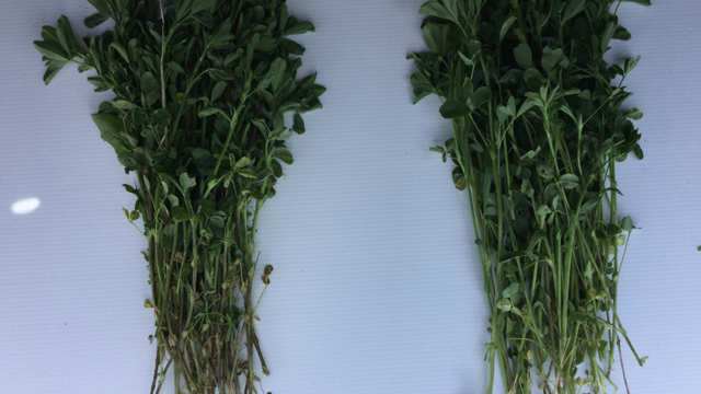 Forage and Cover Crops